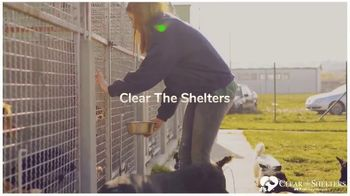 Clear the Shelters TV Spot, 'NBC 6 Miami: Forever Home' - Thumbnail 4
