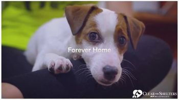 Clear the Shelters TV Spot, 'NBC 6 Miami: Forever Home' - Thumbnail 5