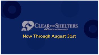 Clear the Shelters TV Spot, 'NBC 6 Miami: Forever Home' - Thumbnail 7