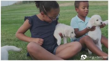 Clear the Shelters TV Spot, 'NBC 6 Miami: Forever Home'
