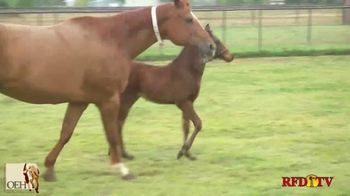 Oklahoma Equine Hospital TV Spot, 'Western Performance Horses' - Thumbnail 8