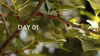 Air Wick Scented Oils TV Spot, 'Apple Orchard' - Thumbnail 4