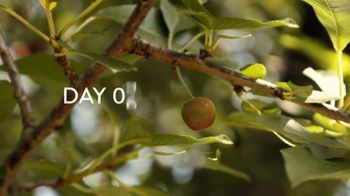Air Wick Scented Oils TV Spot, 'Apple Orchard' - Thumbnail 5