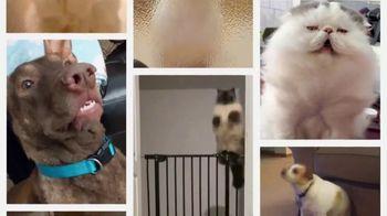 Iams TV Spot, 'Pet Remix' - Thumbnail 2