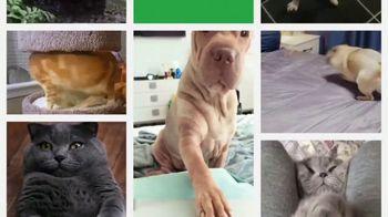 Iams TV Spot, 'Pet Remix' - Thumbnail 6
