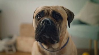Gain Ultra Flings! TV Spot, 'Amor prohibido' [Spanish]