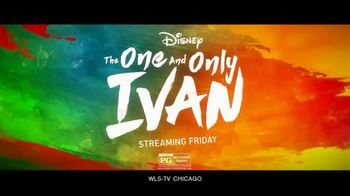 Disney+ TV Spot, 'The One and Only Ivan' - Thumbnail 8