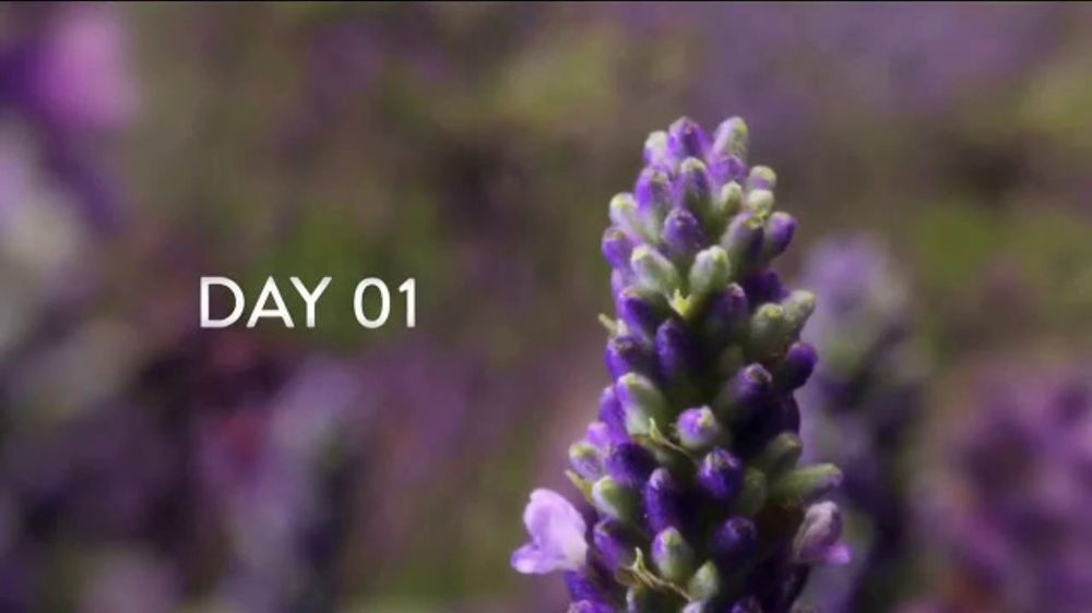 Air Wick Scented Oils TV Commercial, 'Fragrance Day After Day'