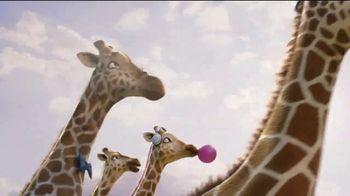 Ark Encounter TV Spot, 'Giraffes: Reopening'