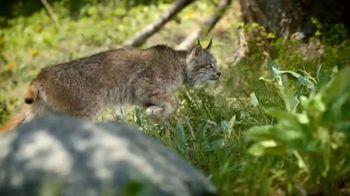 Blue Buffalo TV Spot, 'Lynx Hunger: Earn Rewards' - Thumbnail 3