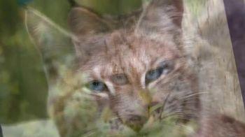 Blue Buffalo TV Spot, 'Lynx Hunger: Earn Rewards' - Thumbnail 4