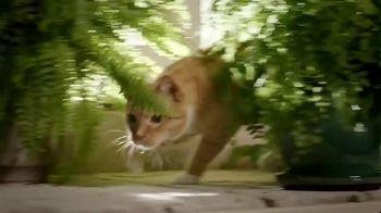 Blue Buffalo TV Spot, 'Lynx Hunger: Earn Rewards' - Thumbnail 5