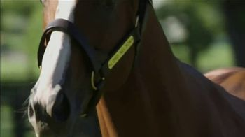 Spendthrift Farm TV Spot, 'Lord Nelson: Pulpit's Last Great Son' - Thumbnail 9