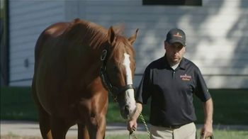 Spendthrift Farm TV Spot, 'Lord Nelson: Pulpit's Last Great Son' - Thumbnail 7