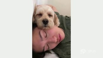Clear the Shelters TV Spot, 'NBC 11 San Francisco: Gus' - Thumbnail 5