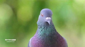 Mattress Firm TV Spot, 'The Pigeon Sent Me' - Thumbnail 4