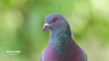 Mattress Firm TV Spot, 'The Pigeon Sent Me' - Thumbnail 6