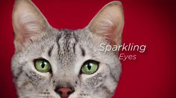 Purina ONE TV Spot, '28 Days: Protein-Rich Dry Food' - Thumbnail 7