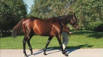 Blame: Over 50 Stakes Horses thumbnail