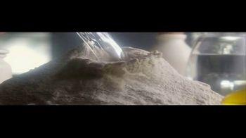 Ashoka Foods Paratha TV Spot, 'Handmade' - Thumbnail 2