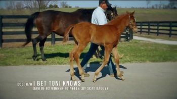 Coolmore America TV Spot, 'Justify: First Foals' - Thumbnail 8