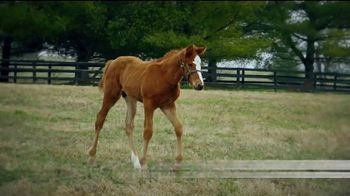 Coolmore America TV Spot, 'Justify: First Foals' - Thumbnail 9