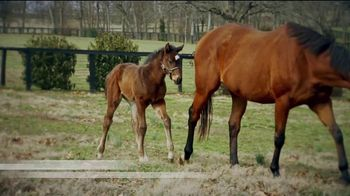 Coolmore America TV Spot, 'Justify: First Foals'