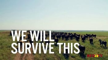 Boehringer Ingelheim TV Spot, 'The Cattle Industry' - Thumbnail 6