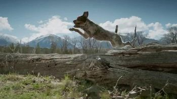 Blue Buffalo BLUE Wilderness TV Spot, 'Feed the Wolf: Earn Rewards'