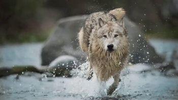Blue Buffalo BLUE Wilderness TV Spot, 'Feed the Wolf: Earn Rewards' - Thumbnail 7