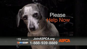 ASPCA TV Spot, 'Today Could be Their Last' - Thumbnail 8