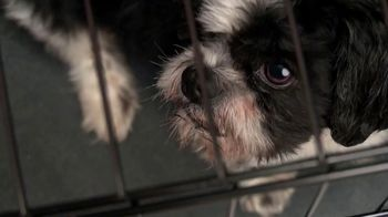 ASPCA TV Spot, 'Today Could be Their Last' - Thumbnail 1
