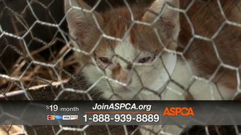ASPCA TV Spot, 'Today Could be Their Last' - Thumbnail 3