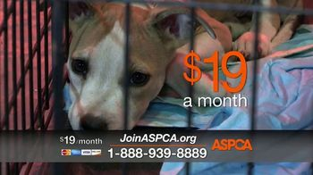 ASPCA TV Spot, 'Today Could be Their Last' - Thumbnail 4