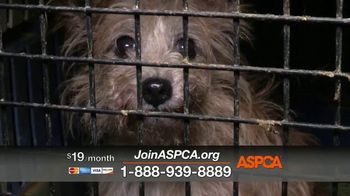 ASPCA TV Spot, 'Today Could be Their Last' - Thumbnail 5