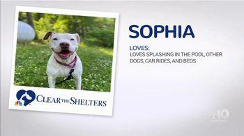 Clear the Shelters TV Spot, 'NBC 10 Boston: Sophia' - Thumbnail 2