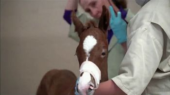 Rood & Riddle Equine Hospital TV Spot, 'Services and Treatment' - Thumbnail 4