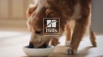 Hill's Pet Nutrition TV Spot, 'Shelter' - Thumbnail 9
