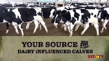 Superior Livestock Auction TV Spot, 'Dairy Influenced Calves'