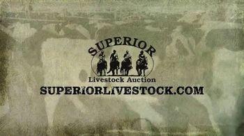 Superior Livestock Auction TV Spot, 'Dairy Influenced Calves' - Thumbnail 8