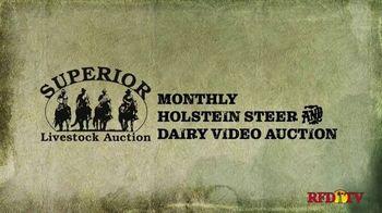 Superior Livestock Auction TV Spot, 'Dairy Influenced Calves' - Thumbnail 1