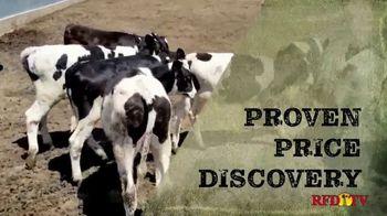 Superior Livestock Auction TV Spot, 'Dairy Influenced Calves' - Thumbnail 4