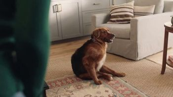 Filtrete TV Spot, 'Let's Clear the Air: Dog' - Thumbnail 1