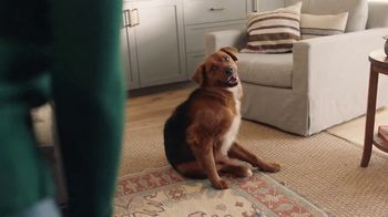 Filtrete TV Spot, \'Let\'s Clear the Air: Dog\'