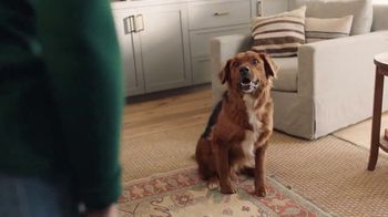 Filtrete TV Spot, 'Let's Clear the Air: Dog' - Thumbnail 3