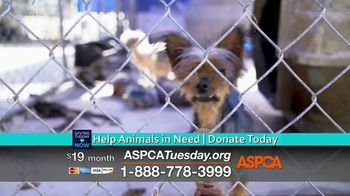 ASPCA TV Spot, 'Giving Tuesday Now: We Haven't Forgotten' - Thumbnail 9