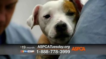 ASPCA TV Spot, 'Giving Tuesday Now: We Haven't Forgotten' - Thumbnail 4