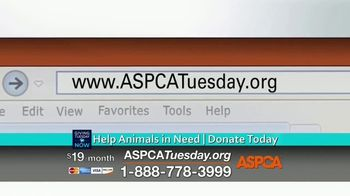 ASPCA TV Spot, 'Giving Tuesday Now: We Haven't Forgotten' - Thumbnail 5