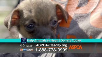 ASPCA TV Spot, 'Giving Tuesday Now: We Haven't Forgotten' - Thumbnail 6