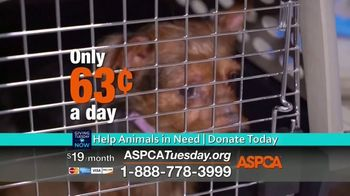 ASPCA TV Spot, 'Giving Tuesday Now: We Haven't Forgotten' - Thumbnail 7